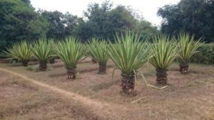 Malawi Lilongwe I Giardini Nazionali Erbari e Botanici di Lilongwe