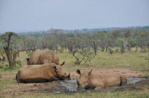 swaziland-mbabane-la-riserva-dei-giochi-mkhaya-di-mbabane