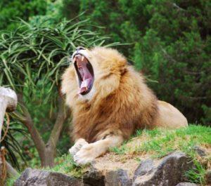 nuova-zelanda-wellington-lo-zoo-di-wellington