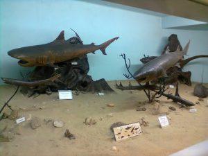 Angola Luanda Il Museo della Storia Naturale
