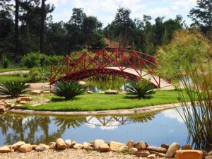 Brasile Brasilia Il Giardino Botanico di Brasília