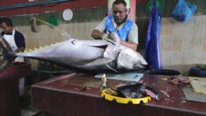 Maldive Male Il Mercato di Malé