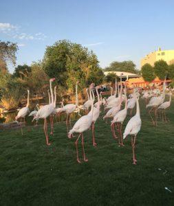 Arabia Saudita Riyad Lo Zoo di Riyad