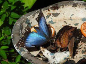 Aruba Oranjestad Butterfly Farm