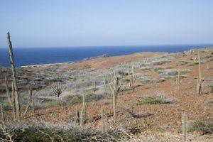 Aruba Oranjestad Il Parco Nazionale Arikok