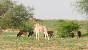 Burkina Faso Ouagadougou Il Parco Bangr Weogo