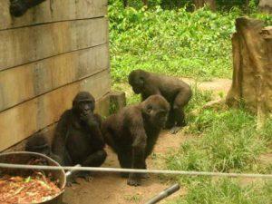 Camerun Yaoundé Il Parco nazionale Mefou