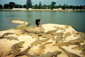 Costa d'Avorio Yamoussoukro Il Lago dei Coccodrilli Sacri
