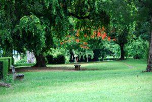 Dominica Roseau I Giardini Botanici di Dominica