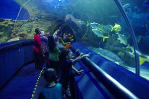 Malesia Kuala Lumpur Aquaria KLCC
