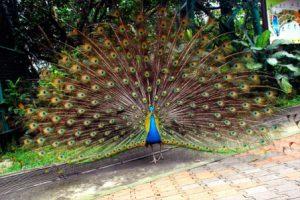 Malesia Kuala Lumpur Kuala Lumpur Bird Park