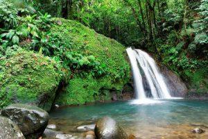 Guadalupa Basse-Terre Il Parco Nazionale di Guadeloupe
