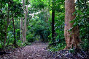 Guinea Conakry Il Giardino Botanico di Conakry