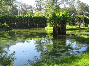 Madagascar Antananarivo Il Giardino Botanico e Zoologico di Tsimbazaza