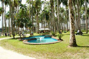 Suriname Paramaribo Il Giardino della Palme di Paramaribo
