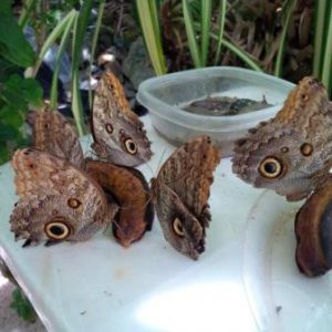 Isole Vergini Statunitensi Charlotte Amali Il Giardino delle Farfalle di Charlotte Amalie