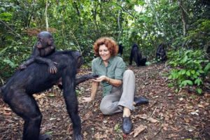 Repubblica Democratica Kinshasa Lola ya Bonobo di Kinshasa