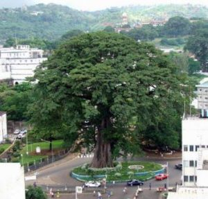 Sierra Leone Freetown L'Albero di Cottone di Freetown