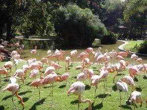 sudafrica-pretoria-i-giardini-nazionali-zoologici-del-sudafrica