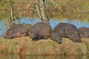 swaziland-mbabane-il-parco-hippo-trail-di-mbabane