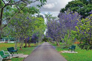 trinidad-e-tobago-port-of-spain-i-giardini-botanici-reali-di-port-of-spain