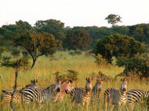 zambia-lusaka-il-parco-nazionale-di-lusaka