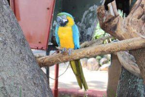 zimbabwe-harare-il-parco-degli-uccelli-kuimba-shiri-di-harare