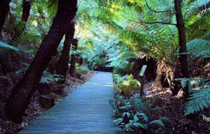 australia-canberra-i-giardini-nazionali-botanici-australiani