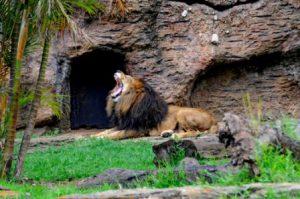 citta-del-guatemala-lo-zoo-aurora-di-citta-del-guatemala