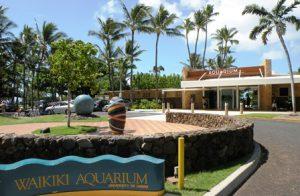 hawaii-honolulu-lacquario-waikiki-di-honolulu