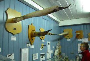 islanda-reykjavik-il-museo-fallologico-islandese-di-reykjavik