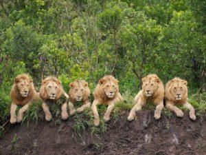 kenya-nairobi-il-parco-nazionale-di-nairobi