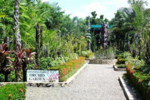 papua-nuova-guinea-port-moresby-il-giardino-nazionale-dellorchidea-di-port-moresby