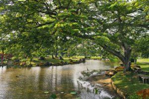 singapore-i-giardini-botanici-di-singapore