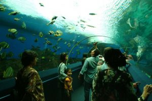 singapore-underwater-world