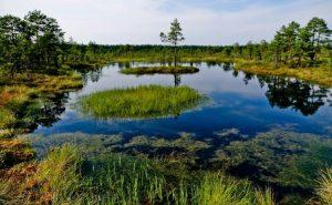 estonia-tallinn-il-parco-nazionale-lahemaa-dellestonia