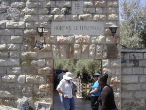 israele-gerusalemme-il-getsemani-di-gerusalemme