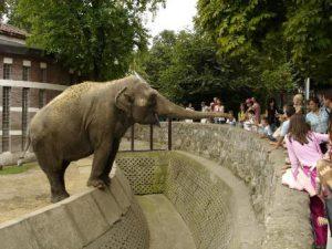 serbia-belgrado-lo-zoo-di-belgrado