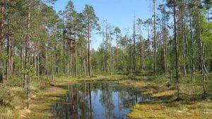 finlandia-helsinki-il-parco-nazionale-di-liesjarvi-di-helsinki