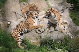 irlanda-dublino-lo-zoo-di-dublino