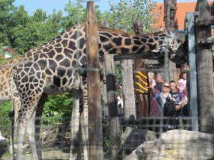 ungheria-budapest-lo-zoo-e-il-giardino-botanico-di-budapest